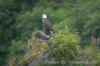 bald eagle 17376 - HEALTH AND FITNESS
