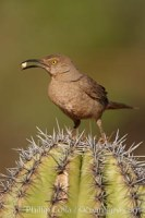 curve billed thrasher 22904 - HEALTH AND FITNESS