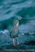 lava heron 02275 - HEALTH AND FITNESS