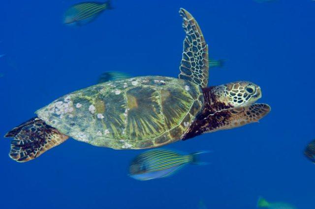 10-green-turtle-714
