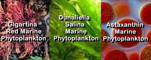 Ormus Minerals Ocean Nectar Phytoplankton