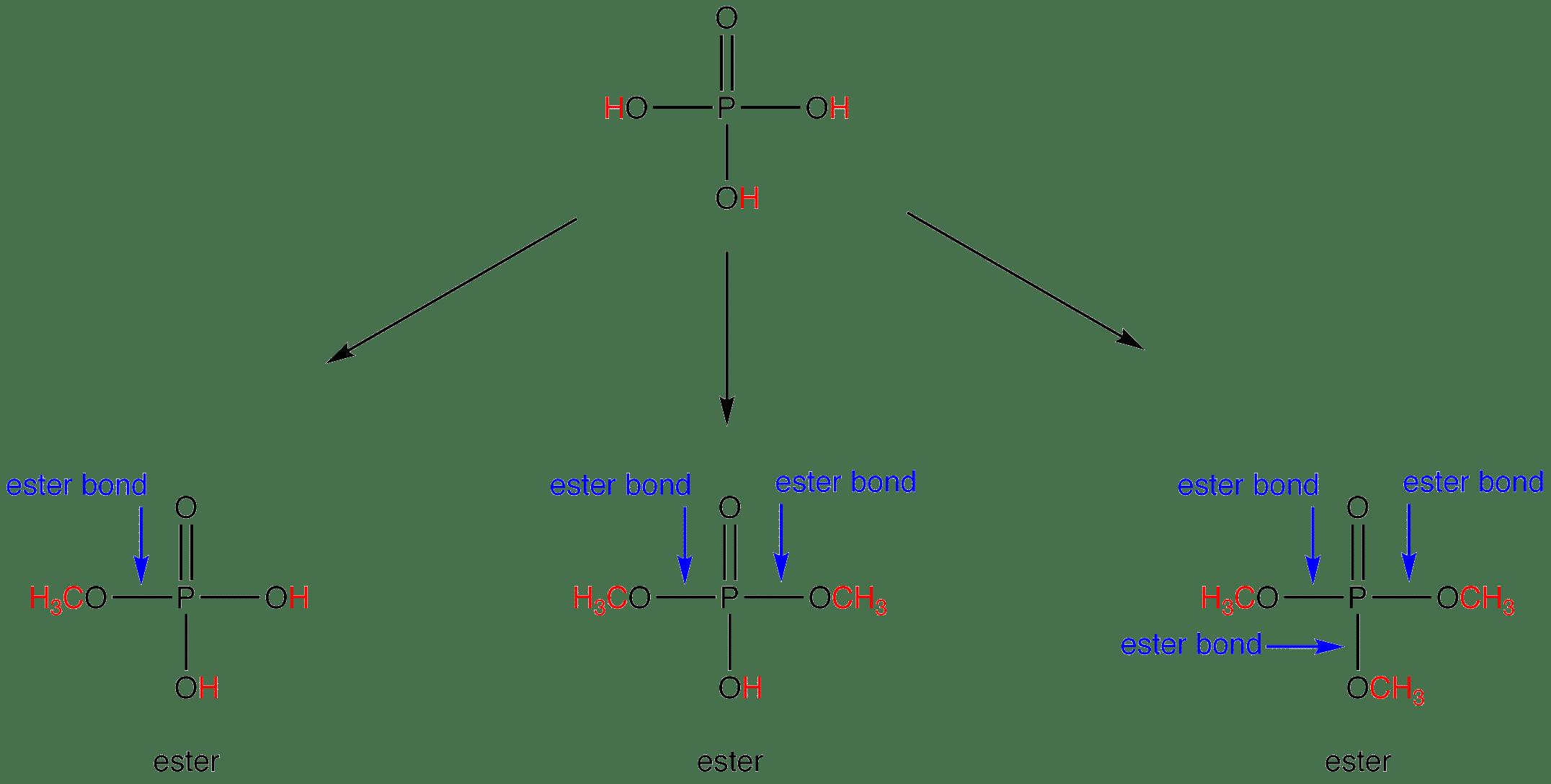 Which Molecule Alkene