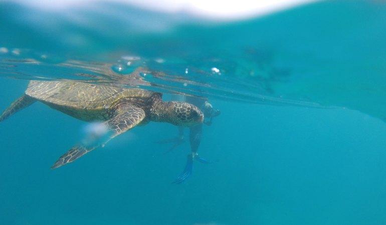 Да плуваш с костенурките: Мауи