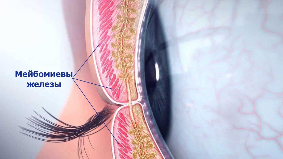 Blefaritis - Empyanity Silmien silmät