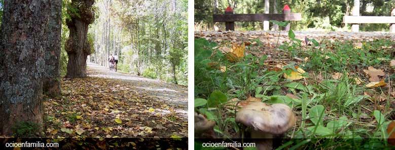 Frutos_de_otoño. Ocioenfamilia.com