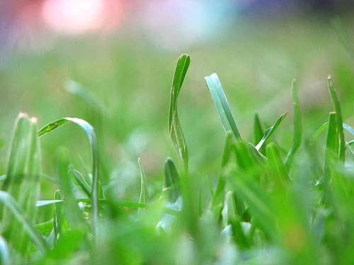 Pise na grama