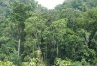 costarica-crucitas_60829