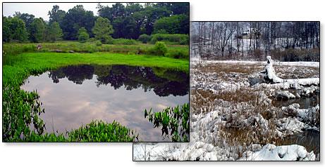 Created wetland - snow