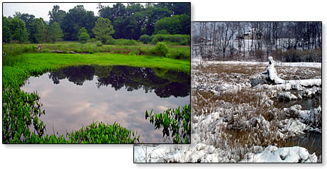 Created wetland - snow