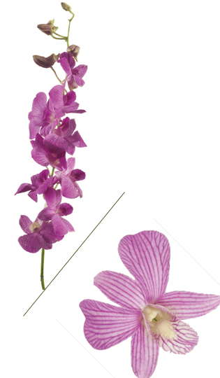 Lavender Dendro