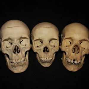 Human Bones/Teeth