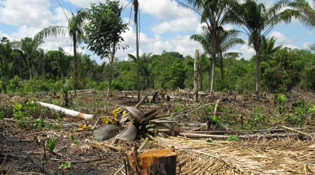Image result for deforestation