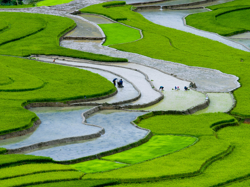 Image result for Myanmar, rice, photos