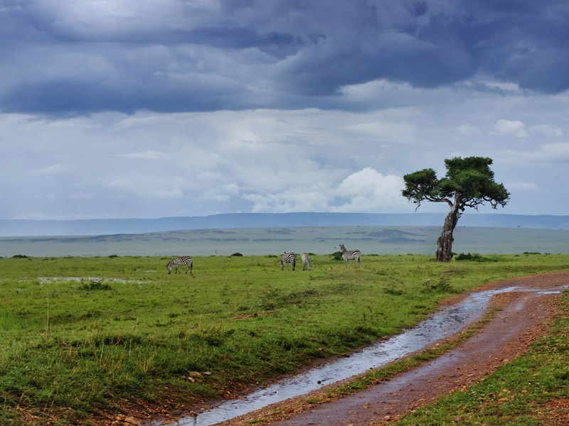 Image result for rainy kenya