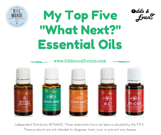 Top Five 5 Essential Oils to Have Next