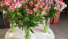 veronica plant met kleine roze bloemetjes
