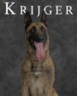 K9 Krijger | Norfolk Police Department, Virginia