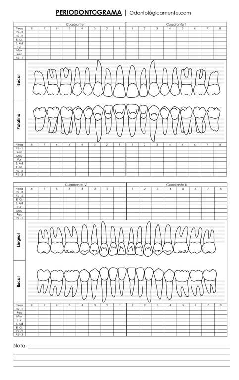 Ficha Periodontal Chart preview
