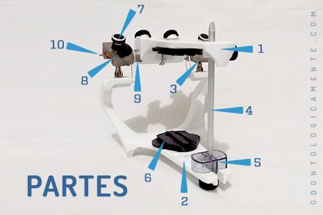 partes de un articulador