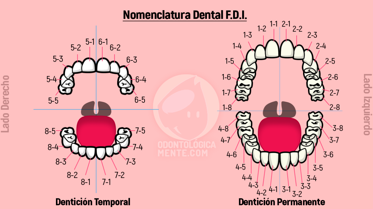 Nomenclatura Dental FDI