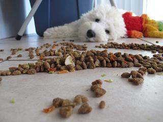 Jak vybrat vhodné kvalitní krmivo pro psa?