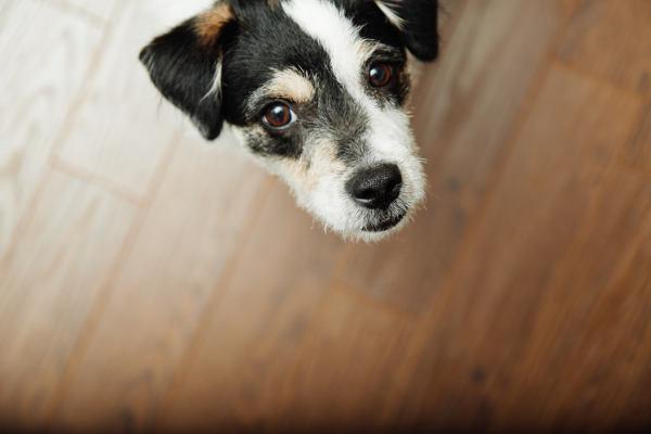 Co je separační úzkost psa a jak se s ní vypořádat?
