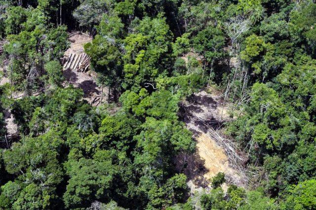 O ambientalista, membro do , combatia o desmatamento dentro da Reserva Biológica do Gurupi. Foto: Ismar Inger/Greenpeace