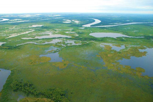 Planície pantaneira com rio Paraguai ao fundo por Fabio Pellegrini