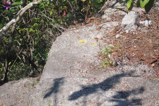 Curso tem como foco o turismo em áreas protegidas. Acima, uma pegada amarela marca o caminho de uma trilha no Parque Nacional da Tijuca. Foto: Arquivo.