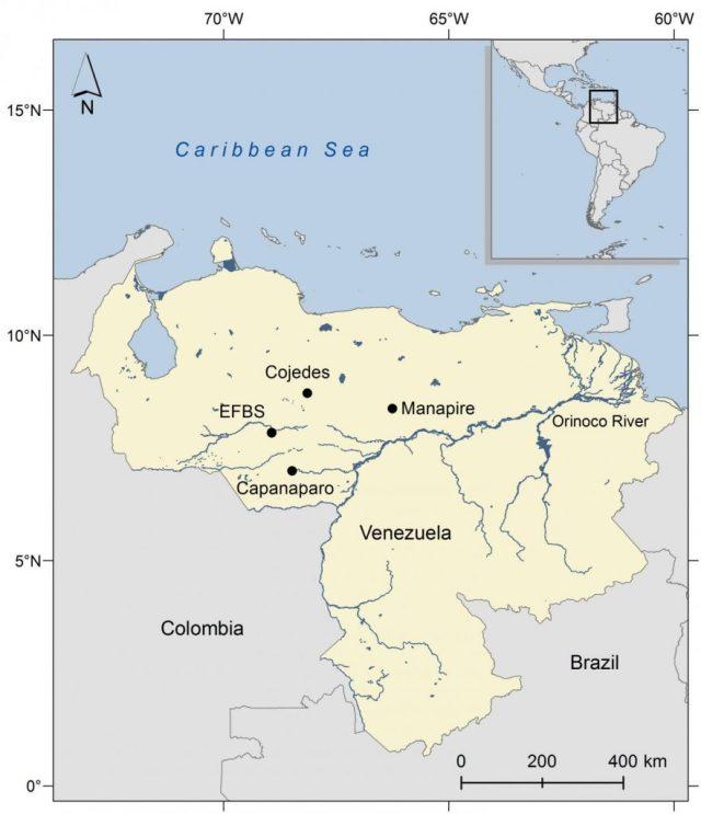 Estudo foi realizado em ninhos de crocodilos reintroduzidos na Estação Biológica El Frio, na Venezuela. Divulgação.