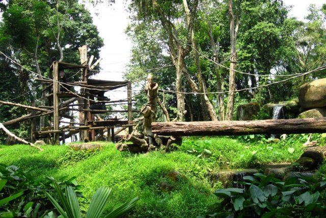 Zoo de Singapura.
