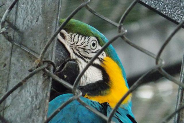Arara no Zoo do Rio. Foto: Rafael F. Sant'Anna/Flickr.