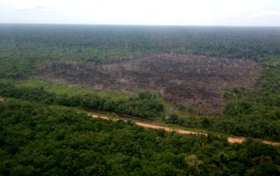 Área desmatada embargada pelo Ibama na BR-319. Foto: Ibama.