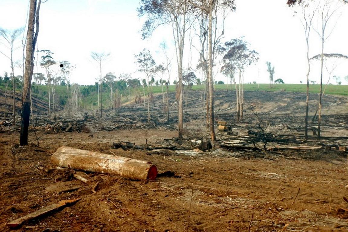 Desmatamento no bioma cresceu quase 60% em 2016 em comparação com o resultado anterior. Bahia foi o estado que mais desmatou, com mais de 12 mil hectares. Foto: Ibama/BA.