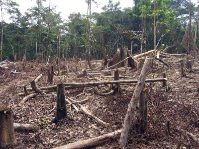 Área desmatada na amazônia colombiana. Foto: Matt Zimmerman/Flickr.