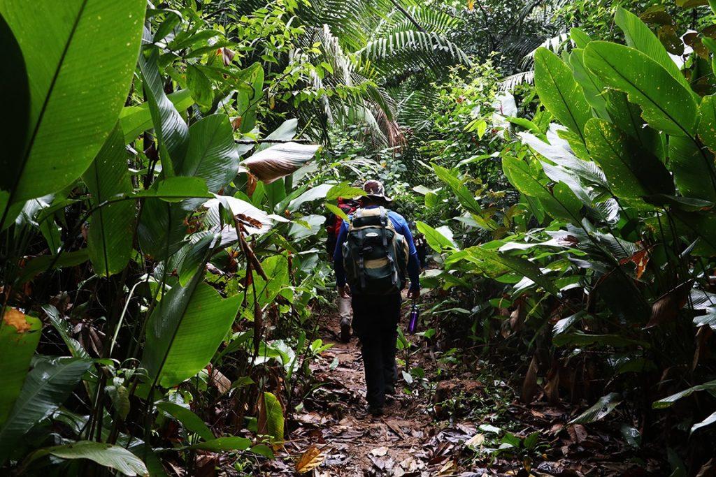 Trecho da trilha, ladeada pela imensidão verde da floresta. Foto: Duda Menegassi.
