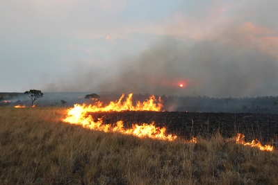 O rastro de destruição deixado pelo fogo na vegetação. Foto: ASCOM ICMBio.