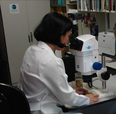 Ana Prudente coletando dados sobre as serpentes Amazônicas no Museu Paraense Emilio Goeldi. Foto: Divulgação.