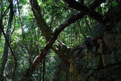 As ruínas da antiga Fazenda da Boa Vista foram reclamadas pela natureza. Foto: Duda Menegassi.