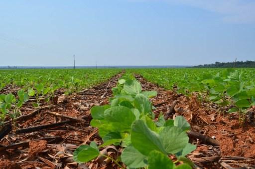 A alta do preço da soja é a principal alegação para explicar o aumento do desmatamento na região de Feliz Natal.