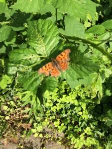 Schmetterlinge gehören zu meinen Lieblingstieren und die Kinder finden sie so spannend, weil sie bunt sind, wunderschön flattern und man sie eben so selten in Ruhe bestaunen kann