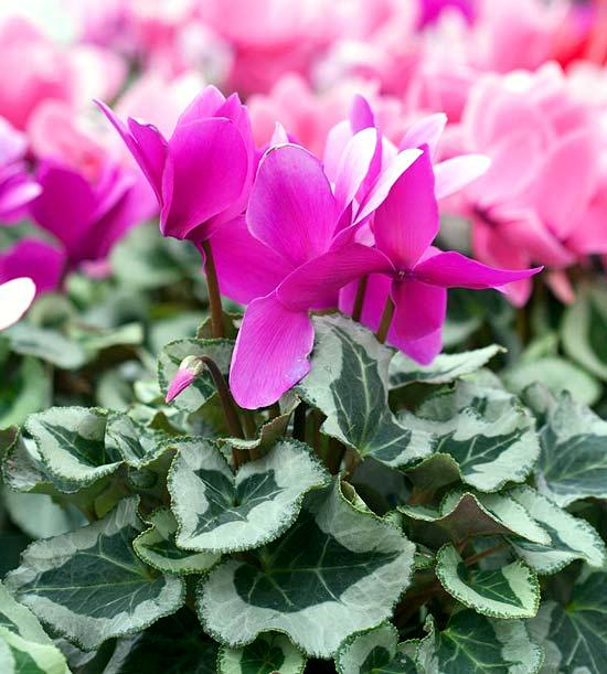 Winter Flowering Plants Are Beautiful As Christmas