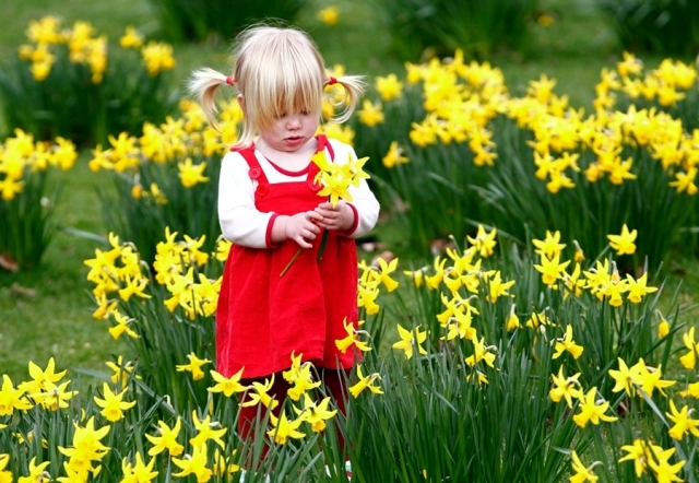 Advice on care of daffodils in the garden and potted flowers     Among the flowers of spring daffodils are very popular  Your flowers  goldgelbenen still carry the sun in the winter garden  They feel very  intense and