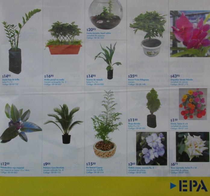 Vivero plantas decorativas exoticas y tropicales EPA