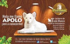 FURESA novedades 2016 nuevo cachorro de leon blanco