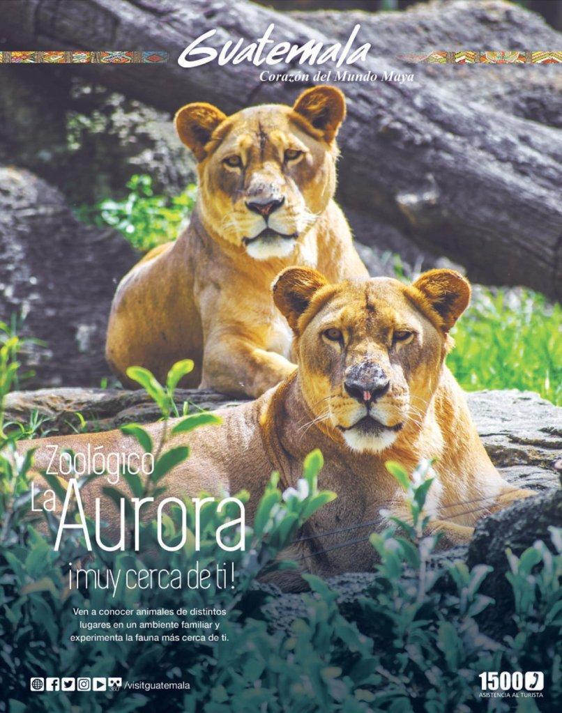 Zoologico de La Aurora como llegar como visitarlo en guatemala