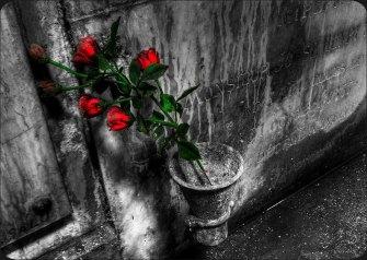 Roses B-W