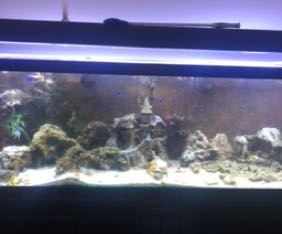 BEAUTIFUL 125 Gallon fish tank!