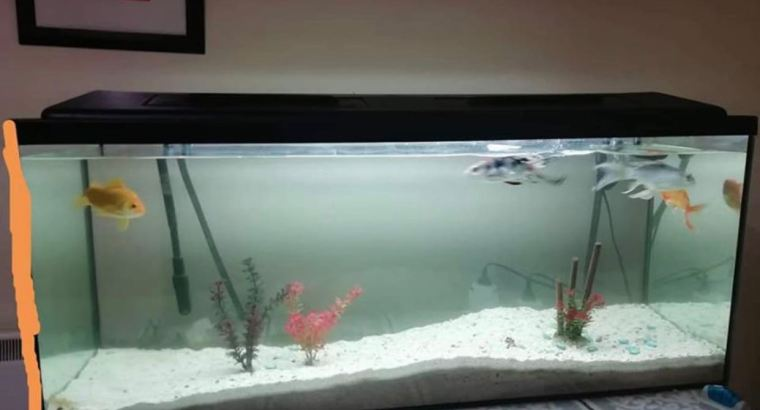 Aquarium 240litre for sale