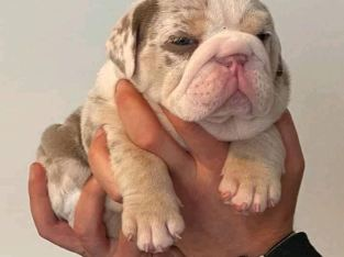 Puppies looking for new homes